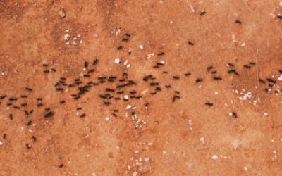 Spring Pest Prevention